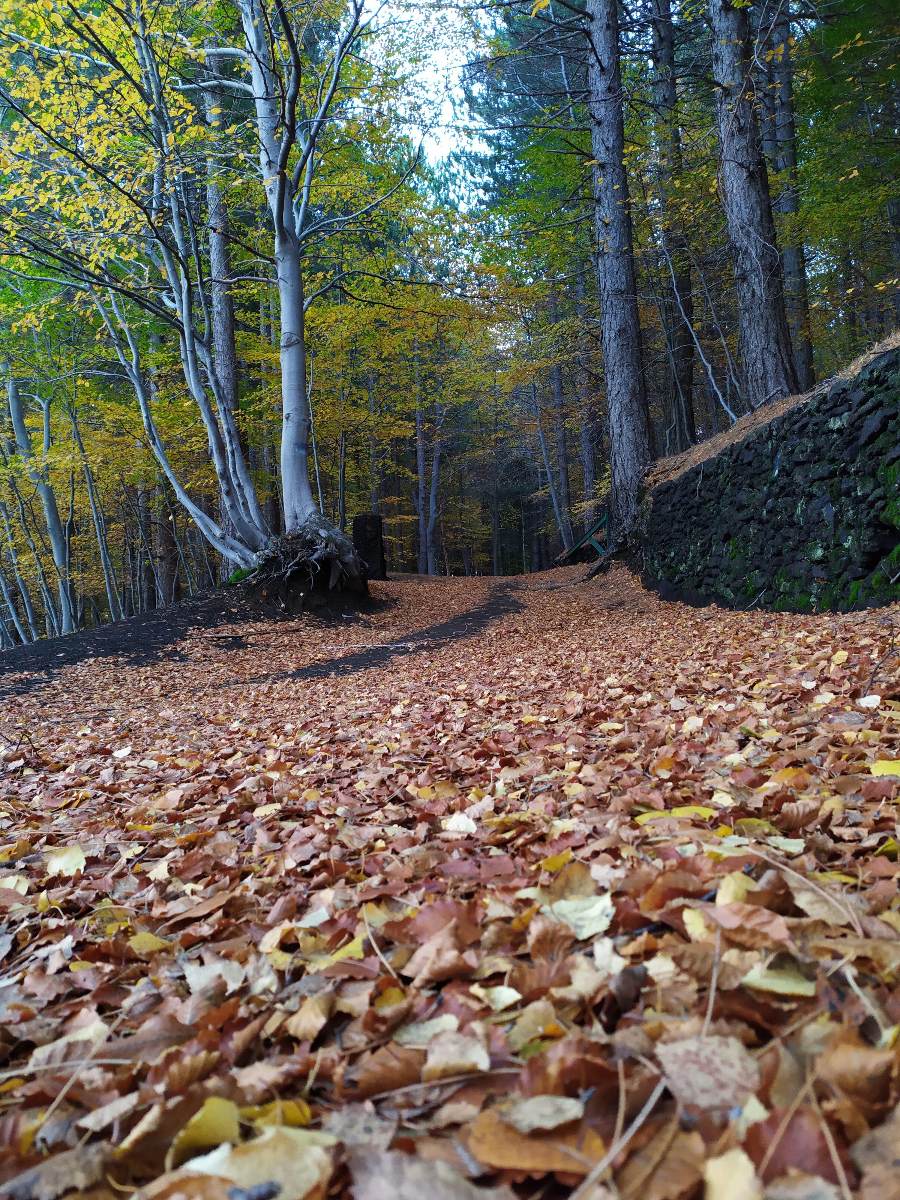Domenica 10 novembre  ETNA: Festa d'autunno al bosco della Cubania